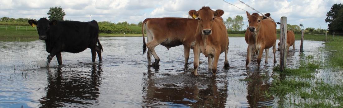 Roel van Buuren/Boerderij Landlust Maasland